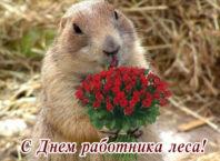 Красивые и прикольные поздравления с Днем работника леса в стихах и в прозе