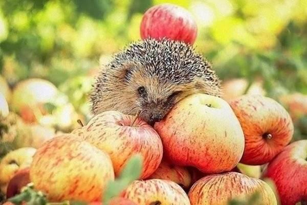 Яблочный Спас когда празднуют