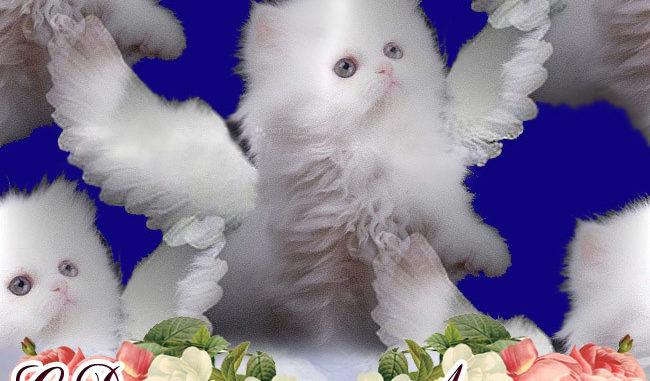 Красивые поздравления с Днем Ангела Людмилы