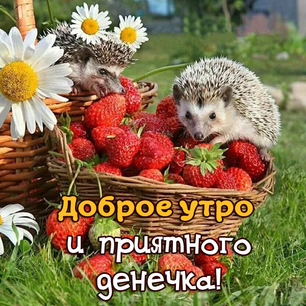 Доброе утро и хорошего дня - картинки с пожеланиями