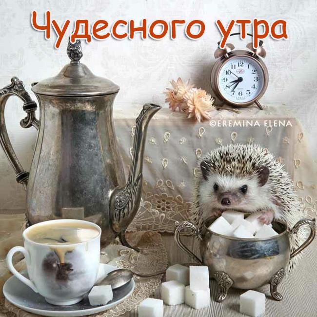 Картинка с Добрым утром позитивная с ежиком