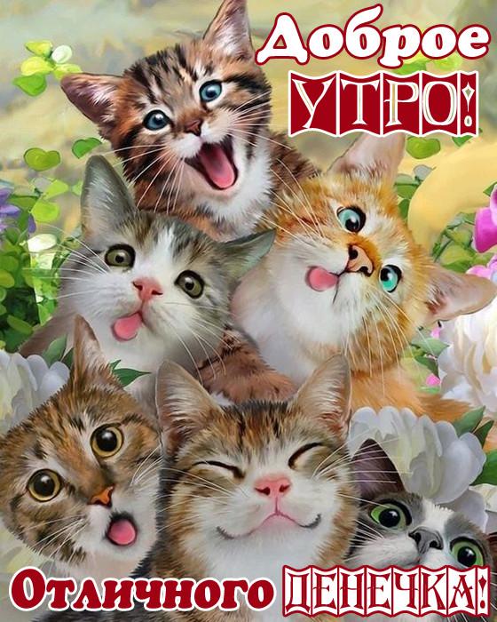 Картинки Доброе утро прикольные позитивные с котами
