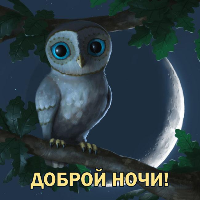 Картинка Доброй ночи с совой
