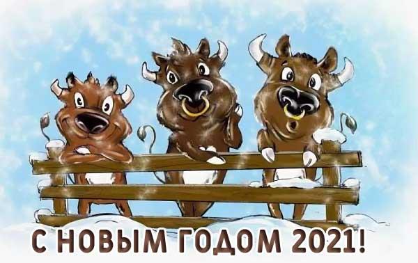 Прикольные поздравления с Новым 2021 годом Быка в открытках
