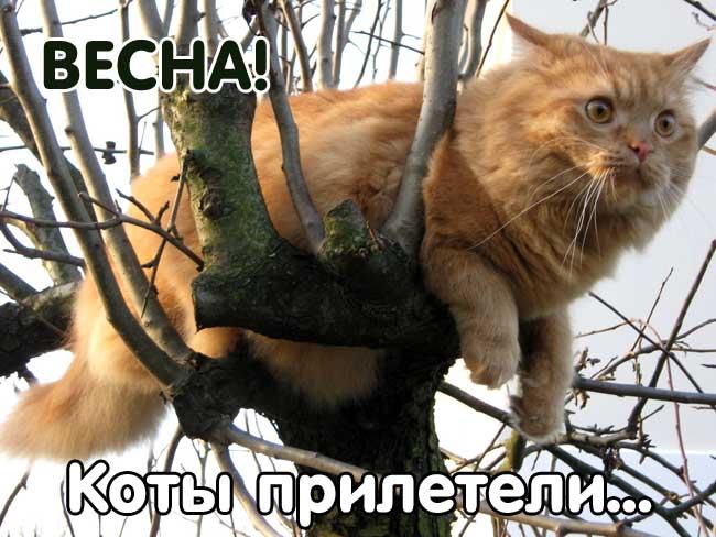 Прикольные картинки про весну с котами