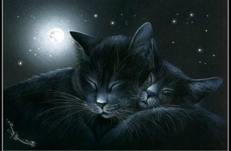 Прикольные картинки Спокойной ночи с надписями