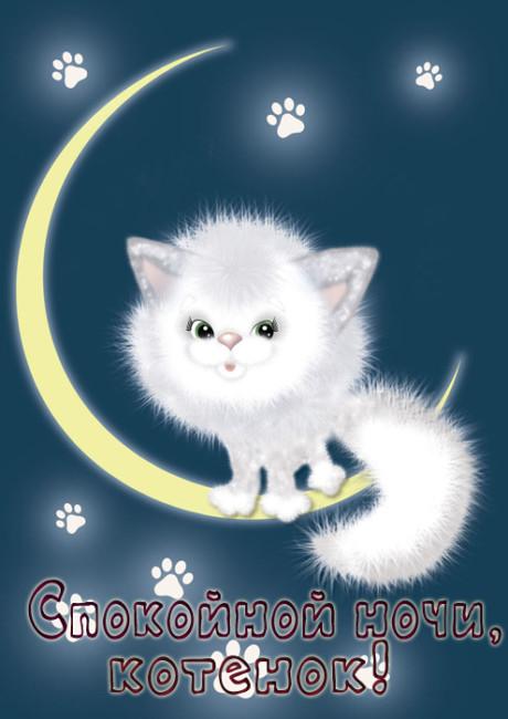 Спокойной ночи для любимого - котенок