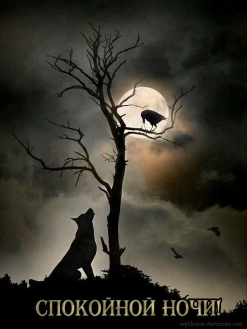 Прикольные картинки Спокойной ночи мужчине скачать